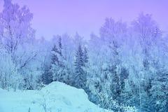 Zim krajobrazowych śnieżnych drzew piękny zmierzch fantazjujący mroźny tr Obraz Royalty Free
