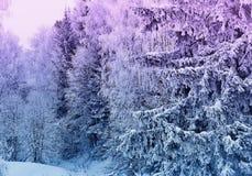 Zim krajobrazowych śnieżnych drzew piękny zmierzch fantazjujący mroźny tr Fotografia Royalty Free