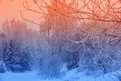 Zim krajobrazowych śnieżnych drzew piękny zmierzch fantazjujący mroźny tr Obraz Stock