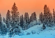 Zim krajobrazowych śnieżnych drzew piękny zmierzch fantazjujący mroźny tr Zdjęcia Stock