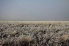 Zim Mroźni pola Fotografia Stock