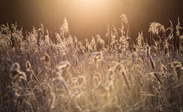 Zim płochy w słońcu Zdjęcia Royalty Free