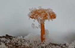 Zim pieczarki pod miękkim śniegiem obrazy stock