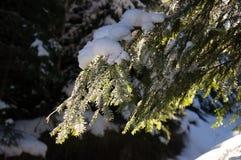 Zim przygody Mapa Carpathians carpathians Ukraina zdjęcie royalty free