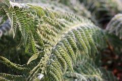 Zim rośliny są w śniegu obraz royalty free