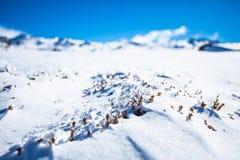Zim rośliny Zamykać Up Zdjęcia Stock