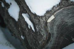 Zim rośliny Obrazy Stock