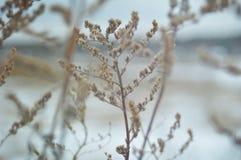 Zim rośliny Fotografia Stock