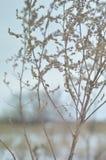 Zim rośliny Zdjęcie Stock
