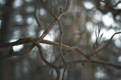 Zim rośliny Zdjęcie Royalty Free