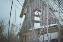 Zim rośliny Zdjęcia Royalty Free
