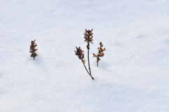 Zim rośliny Zdjęcia Stock