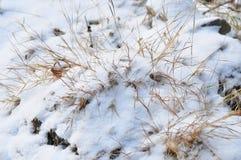 Zim rośliny Obraz Royalty Free