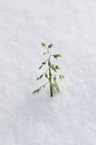 Zim rośliny Fotografia Royalty Free