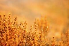 Zim Wildflowers Obrazy Stock