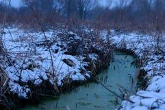 Zim zielenie obrazy stock