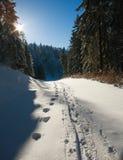 Zima śnieżny ślad w sosnowym lesie na światła słonecznego i niebieskiego nieba backg Obraz Royalty Free