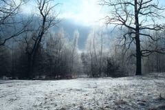Zima śnieżny krajobraz z mroźnymi drzewami w drewnach Jaskrawa niebo śniegu halizna zdjęcia royalty free
