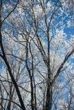 Zima śnieżny las Obrazy Stock
