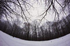 Zima śnieżny las Fotografia Royalty Free