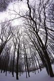 Zima śnieżny las Zdjęcia Royalty Free