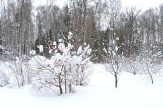 Zima, śnieg, drzewo, krajobraz, zimno, las, natura, biel, niebo, mróz, drzewa, błękit, scena, lód, marznący, sezon drogowy, śnież zdjęcie royalty free