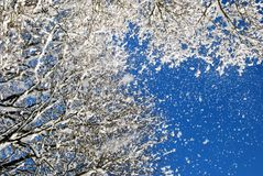 Zima śnieg i słońce Fotografia Stock