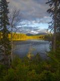 Zima, śnieg, oszronieje Śnieżne świerczyny Magiczna zima lasu zima Zdjęcie Stock