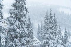Zima śniegu dom kurort Jadł w śniegu zdjęcie royalty free