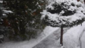 Zima śniegu ogródu hd materiał filmowy zbiory wideo
