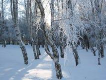 zima światła zdjęcie stock