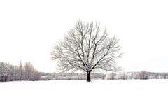 zima Zdjęcie Royalty Free