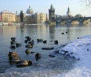 Zima Zdjęcia Stock