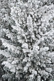 Zima 12 Zdjęcie Stock