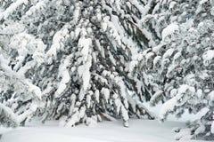 Zima 13 Zdjęcie Stock