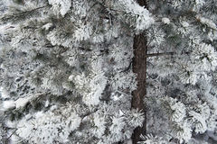 Zima 14 Obraz Stock