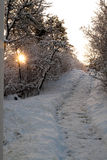 Zima 4 Obrazy Stock