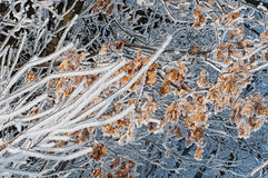 Zima abstrakta liście w śniegu Zdjęcie Stock