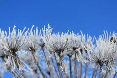 Zima Biali kwiaty przeciw niebieskiemu niebu obrazy stock