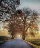 Zima chłodny ranek w drodze z wschód słońca obraz royalty free