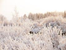 Zima chmurny krajobraz z mrozem na gałąź drzewa Zdjęcie Royalty Free