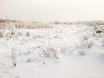 Zima chmurny krajobraz z mrozem na trzcinach i gałąź krzaki Obraz Stock