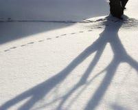 Zima cień Obrazy Royalty Free
