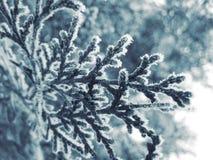 Zima cyprys Obrazy Royalty Free