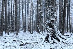 Zima czas wśrodku lasu na mglistym dniu Obrazy Royalty Free
