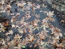 Zima czasu kałuża w Atchison Zdjęcie Royalty Free