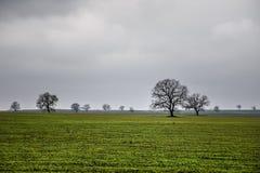 Zima czasu krajobrazu wizerunek drzewo lub zieleni pole, łąka z drzewem przy zima czasem zachmurzone niebo Azerbejdżan natura cau Obraz Stock