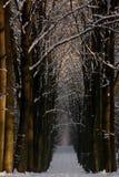 zima drewna Obrazy Royalty Free