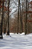 zima drewna zdjęcia stock