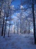 zima drewno Zdjęcie Stock